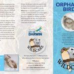 Orphaned birds part1